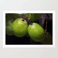 Grapes Art Print by LoRo  Art & Pictures - $16.55