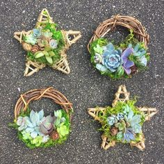 4 Living Succulent Star Ornament Made-to-Order image 5