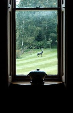 The Stag on the Lawn | by Ade Milne