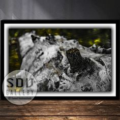 Downloadable image, digital photo, printable wall art, dream, tree trunk, river, sunlight, spring, forest, reflection, Vienna, Austria Spring Forest, Photo Tree, Vienna Austria, Landscape Photos, Nature Photos, Printable Wall Art, Sunlight, Reflection, Nature Photography