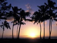 size: Photographic Print: Palm Trees in Silhouette During Sunset on Oahu, Hawaii by Richard Nowitz : Artists Oahu Hawaii Map, Hawaii Travel, Travel Around The World, Around The Worlds, Palm Tree Silhouette, Pretty Beach, Vacation Spots, Tropical Vacations, Vacation Rentals