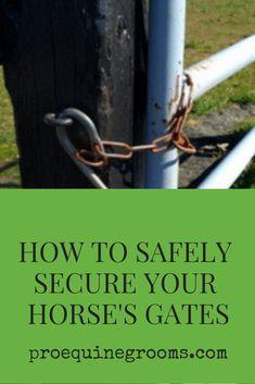 Barrel Racing Saddles, Barrel Racing Horses, Horse Stalls, Horse Barns, Horse Fencing, Pasture Fencing, Horse Paddock, Horse Show Clothes, Morgan Horse