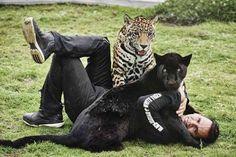 black jaguar white tigers - Google Search