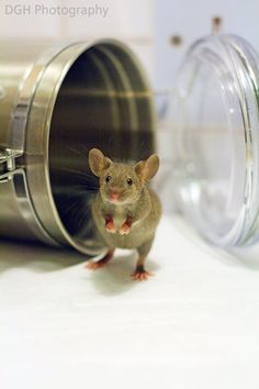 """* * CHURCH MOUSE: """" Me confess; me ates allz de crumbs way backs in dis container. Could yoo fillz it backs up pleeze ?"""""""