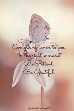 """Everything comes to you. In the right moment. Be patient. Be grateful."""