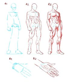 Very simple and basic guide as to how I, myself, do anatomy. This is NOT the real body anatomy nor anyone's specific guide. I created this completely by myself. I self studied anatomy for. Male Figure Drawing, Guy Drawing, Character Drawing, Drawing Reference Poses, Drawing Poses, Art Reference, Anatomy Sketches, Art Sketches, Dbz Drawings