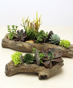 on to be you with this unique succulent garden in a faux log shaped vessel. Perfect for a dorm room or a teacher's desk!Dream on to be you with this unique succulent garden in a faux log shaped vessel. Perfect for a dorm room or a teacher's desk! Succulent Planter Diy, Succulent Landscaping, Succulent Gardening, Succulent Arrangements, Planting Succulents, Cactus Terrarium, Log Planter, Planter Ideas, Suculentas Interior