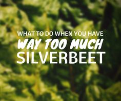 What to do with silverbeet / swiss chard / spinach. Recipe ideas, freezing and preserving.