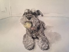 Cyril the schnauzer with his ball - by Erin Donaldson 2015