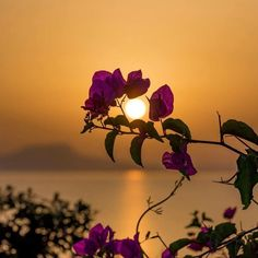 Most popular sunset photography wallpaper nature 40 Ideas Summer Nature Photography, Sunset Photography, Background For Photography, Amazing Photography, Photography Backgrounds, Flor Iphone Wallpaper, Rose Wallpaper, Wallpaper Backgrounds, Beautiful Flowers Wallpapers