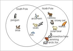 Pix comparing animals of the North Pole to animals of the South Pole Polar Animals Preschool Crafts, Animal Activities, Activities For Kids, Preschool Lessons, Kindergarten Activities, North Pole Animals, Learning Websites For Kids, Artic Animals, Polo Norte