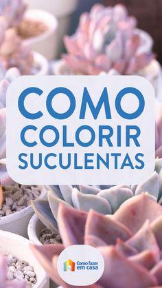Como deixar as suculentas coloridas Succulent Gardening, Succulent Care, Succulent Terrarium, Cacti And Succulents, Planting Succulents, Eco Garden, Dish Garden, House Plants Decor, Plant Decor