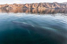 fotografo-passa-25-anos-documentando-a-beleza-majestosa-de-baleias-e-golfinhos-3