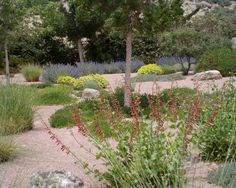 The gentle color contrasts and soft textures give this desert landscape a feeling of lushness without using water inappropriately. Design by WaterWise Landscapes Inc. in Albuquerque, NM. Colorful Plants, Large Plants, Landscape Design, Garden Design, Desert Landscape, Gardening Magazines, Water Wise, Drought Tolerant Plants, Traditional Landscape