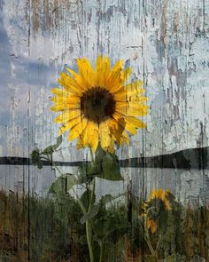 Sunflower Lake Rustic Decor, Rustic Floral Home Decor Wall Art Matted Picture  Status: Availabl...