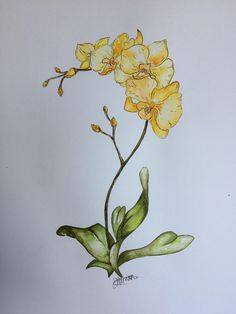 Yellow orchid watercolour and ink - Modern Daisy Flower Drawing, Orchid Drawing, Plant Drawing, Flower Art, Watercolor Orchid Tattoo, Watercolor And Ink, Watercolor Flowers, Watercolor Paintings, Orchids Painting