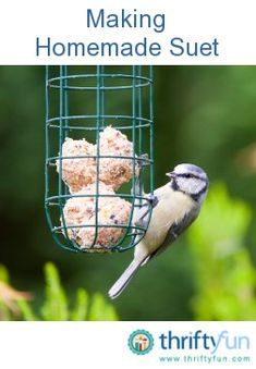 Never throw away grease from cooking, bread crumbs, stale cereal, stale crackers, dried fruits, and nuts again! Make bird food for the winter!