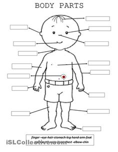 The Human Body Esl Worksheets Also Caps Worksheets For Grade 4 English ...