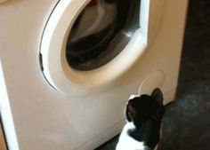 Doing laundry like a rich person.   10 Biggest Ways Humans Are Wasteful On A Daily Basis