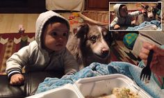Hungry dog shocks its family by SPEAKING the word 'mama' #DailyMail | You can also see this & more at:  http://twodaysnewstand.weebly.com/mail-onlinecom
