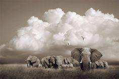 El lado más artístico de la fauna africana