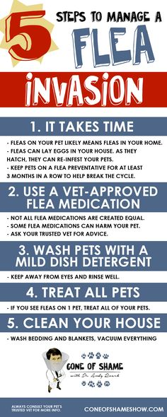 Get rid of fleas on pets and in your home with these 5 tips from Dr. Andy Roark