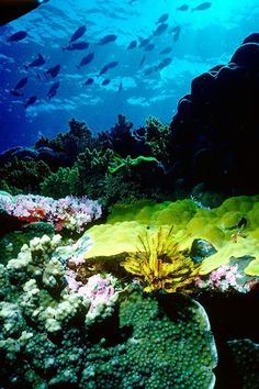 Coral on the Great Barrier Reef, Queensland, Australia - I learnt to scuba dive today and now this looks achievable...