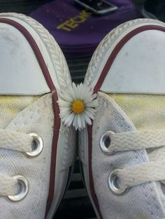 all stars, daisy, and converse image