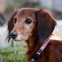 Pin On Dachshund Rescues