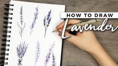 Flower Drawing How to Draw Lavender Flowers! Simple Flower Drawing, Sunflower Drawing, Drawing Flowers, Tattoo Flowers, Flower Drawings, Henna Flowers, Cherry Blossom Flowers, Lavender Flowers, Lavender Crafts