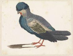Anonymous | Staande vogel naar links, mogelijk een duif, Anonymous, Johan Teyler, 1688 - 1698 |