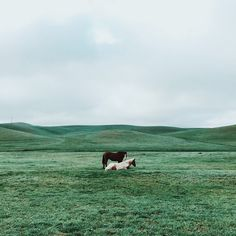 """Stallions.  Image by @ownthelight / #VSCOcam C8 kibenkophoto.vsco.co"""