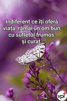 Indiferent ce îți oferă viața Words Of Encouragement, Kids And Parenting, Motto, Good To Know, Positive Quotes, Spirituality, Positivity, Faith, Inspirational Quotes