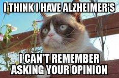 55 Ideas Funny Sarcasm Memes Grumpy Cat For 2019 Cute Animal Memes, Funny Animal Quotes, Animal Jokes, Funny Animal Pictures, Funny Animals, Funny Quotes, Sarcasm Quotes, Humor Quotes, Sports Pictures