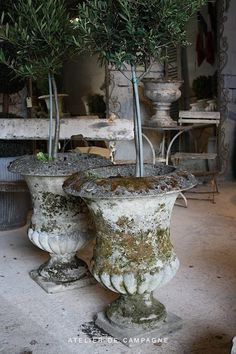 Rosemary topiary trees in antique urns - nice! Container Plants, Container Gardening, Urn Planters, Rustic Planters, Decoration Plante, Garden Urns, Deco Floral, Garden Ornaments, Natural Living
