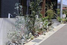 Dry Garden, Garden Paths, Japanese Plants, My House, Exterior, Landscape, Green, Flowers, Image