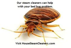 Read the #Bed #Bugs #and #Steam Article at HouseSteamCleaners.com.