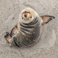 Awww... Seal Love :-)
