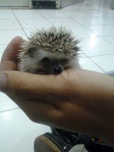 Supermini :) cute