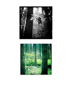Cathedral Pines V | Alexandra E. Haniford
