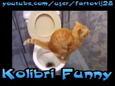 Epic Funny Cats (october 2014) #1 Best Funny Videos, October 2014, Funny Cats, Youtube, Funny Kitties, Funny Cat Photos, Funny Kittens