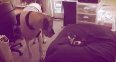 E poi chiediamoci perchè i cani non hanno una gran simpatia per i gatti…http://tuttacronaca.wordpress.com/2013/10/17/quel-gatto-e-proprio-un-ladro-di-cuccia-parola-di-cane/