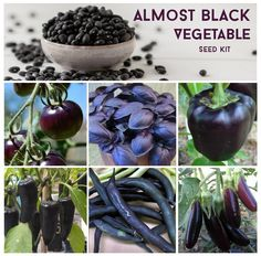 "'Black"" vegetables #blackplants #black"