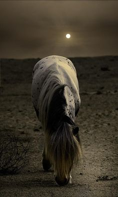 Grazing by moonlight (this land is terribly barren)