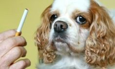 Can A Dog Get Lung Cancer From Secondhand Smoke