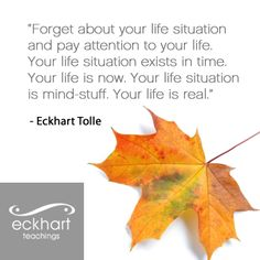 Eckhart Tolle is my hero.he has helped me stay in the now and has cleared the path for me to understand that Your life is real.Your life is now.You life situation is mind stuff. Words Quotes, Wise Words, Life Quotes, Sayings, Text Quotes, Daily Quotes, Eckhart Tolle, Power Of Now, A Course In Miracles