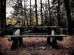 #picnictable for none on #beaverisland #puremichigan #nature  #fallcolors at #dusk