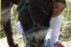 Découvrez la complicité entre un âne et un enfant, nos paysages, une autre façon de se promener. Un âne est très sociable, joueur et on s'y attache.  Ferme du coq à l'âne 05 - LAGRAND - 06 79 79 30 04