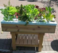 The Hydroponic Salad Table