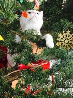 Cats love trees - Album on Imgur Creative Christmas Trees, Holiday Tree, Christmas Photos, Winter Christmas, Xmas, Christmas Kitten, Christmas Animals, Cute Cats And Kittens, Kittens Cutest